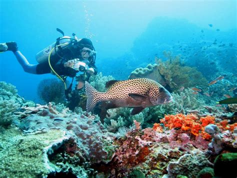 dive di bali tourism board tourist facilities bali diving