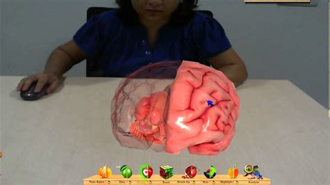 How To Make A 3d Human Out Of Paper - augmented reality model of human brain