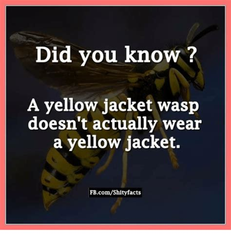 Yellow Jacket Girl Meme - 25 best memes about yellow jackets yellow jackets memes