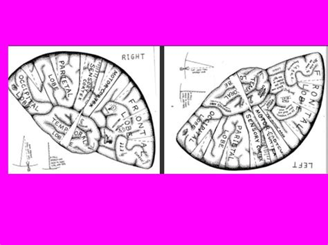 free worksheets 187 brain printable free math worksheets