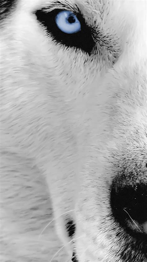 wallpaper iphone 5 wolf wolf eye wallpaper for iphone x 8 7 6 free download