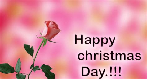 happy christmas day quotes messages  wishes