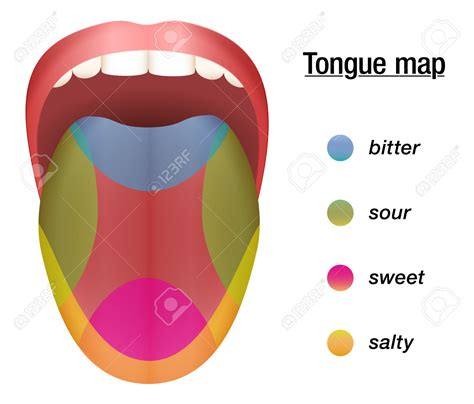 taste sections of the tongue sensen clipart salty taste pencil and in color sensen