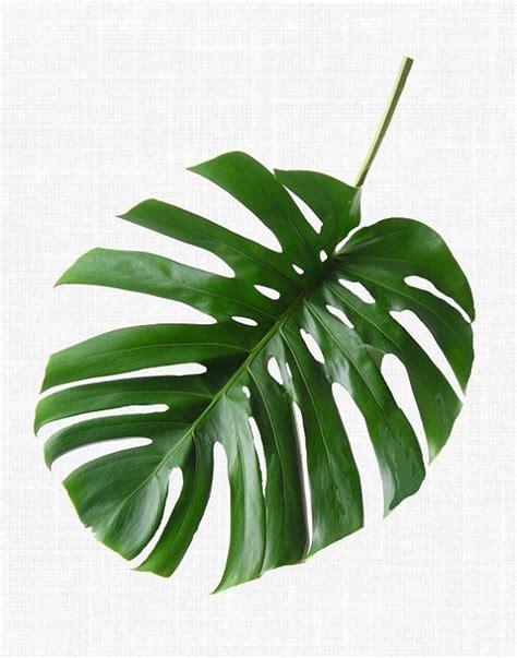 diy tropical leaves art think crafts by createforless best 25 leaf prints ideas on pinterest diy pillows