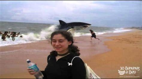 submarine shark attacks woman german backpacker shark attack on australian beach real