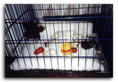 crate training crate training puppies crate trainpuppy dog breeds picture