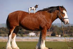 Horses » Ideas Home Design