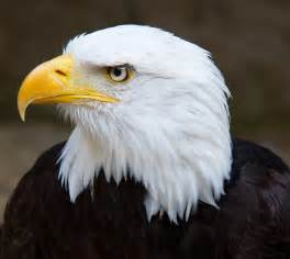 Seven leadership principles to learn from an eagle accraconnect