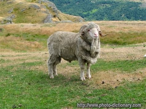 ram definition for ram photo picture definition at photo dictionary ram