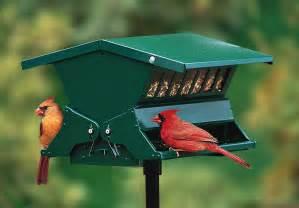 What Is A Bird Feeder Squirrel Proof Bird Feeder Tractor Supply