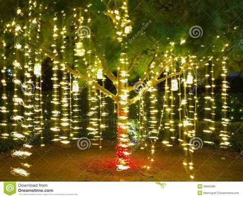 holiday lights in tree summer night stock photo image