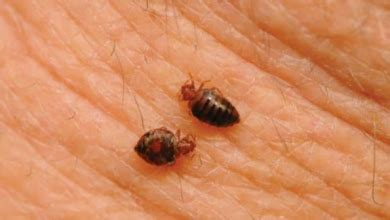 Exterminate Bed Bugs by Bed Bug Extermination In Myrtle By Complete Pest