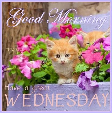 good morning have a great wednesday pictures, photos, and