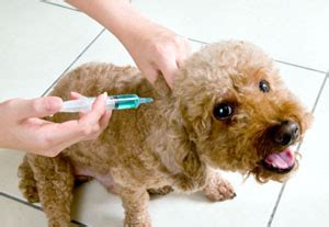 can a vaccinated get rabies mclean county il official website rabies vaccination for pets
