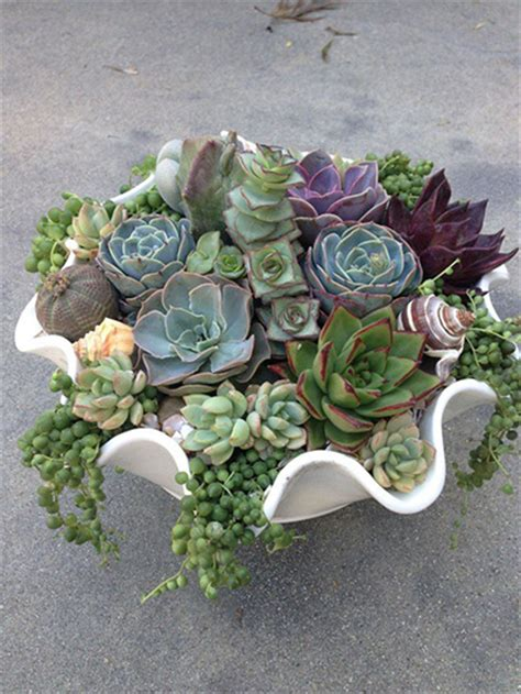 Where To Buy Planters Near Me Top 10 Succulent Decorating Ideas
