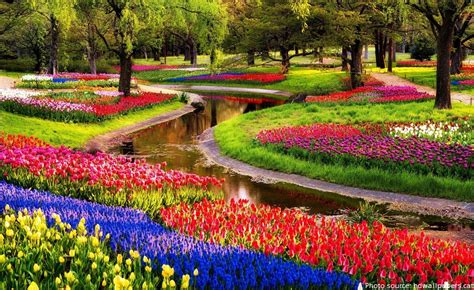 Keukenhof Gardens by Interesting Facts About Keukenhof Gardens Just Facts