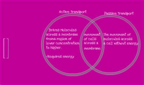 passive and active transport venn diagram copy of copy of venn diagram passive active transport