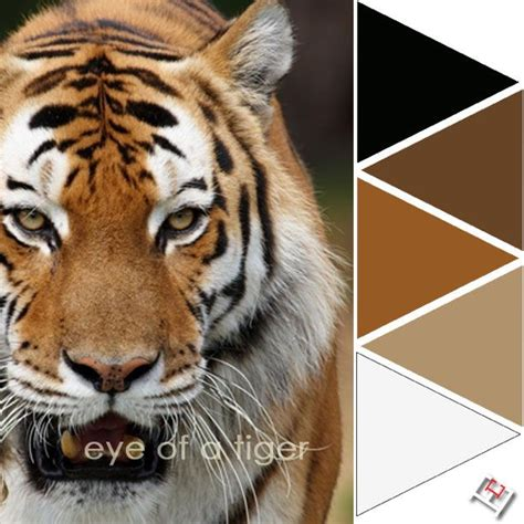 tiger color 17 best images about color palette wildlife expressions