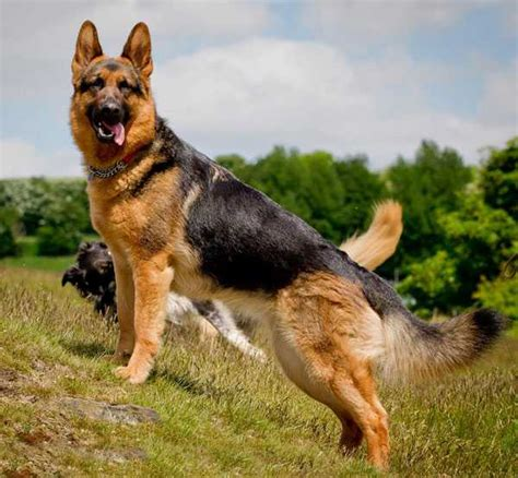 breeds in india top 10 best breeds in india whatsup guys