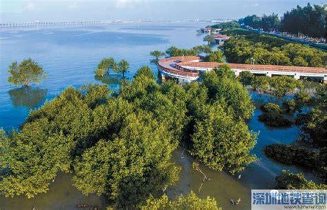 红树林怎样去西冲海滩哦湖北免,深圳红树林是海吗
