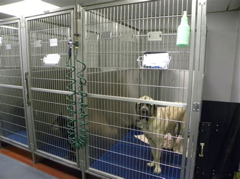 boarding okc cat kennel okc cat s paradise spa and boarding ottawa ontario home of pictures for