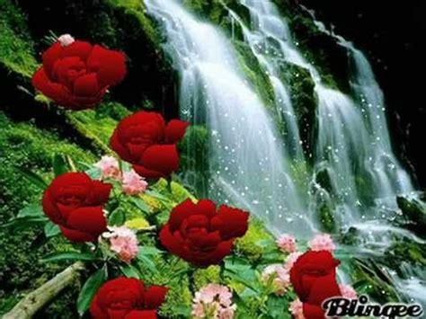 las mas hermosas fotos de rosas con poemas de amor rosas para mi gran amiga ysabel youtube