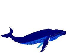 Moving Blue Moving Blue Mblue Polo im 225 genes con movimiento de la tierra
