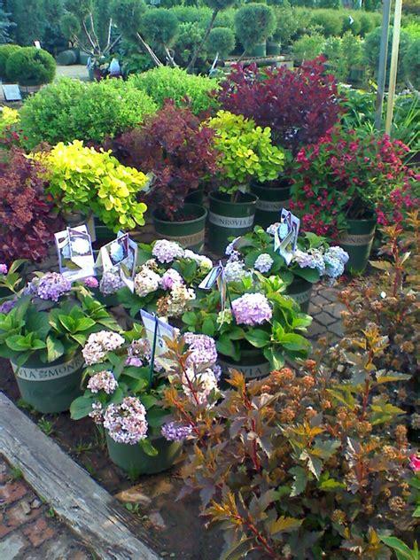 perennials clarkes garden center stone depot
