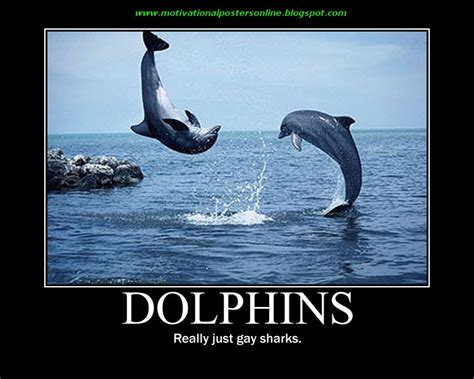 Dolphin Meme - 27 funny dolphin pictures