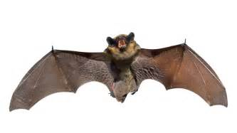 bat myths busted