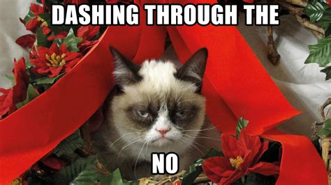 Merry Christmas Cat Meme - a grumpy cat christmas sarach stefith
