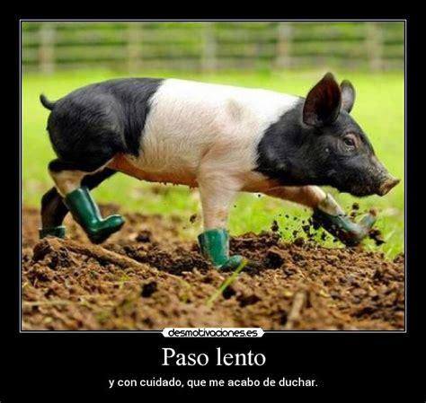 imagenes graciosas de cerdos para navidad im 225 genes y carteles de chistoso pag 32 desmotivaciones