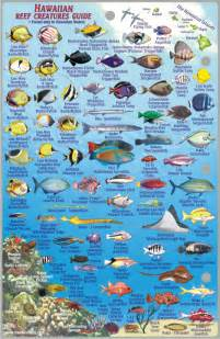 1 Bedroom For Rent By Owner Kiahuna Fish Id Chart