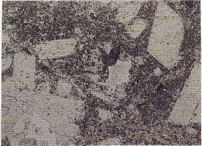 trachyte thin section sisyphus iii trachyte
