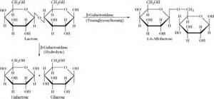 induktor biochemie induktor lac operon 28 images rekombinante proteine lac operon new page 1 poincare matf bg