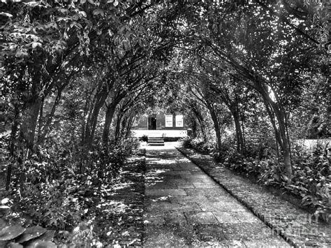 Wedding Arch Called by The Wedding Arch In Black And White Photograph By Joan