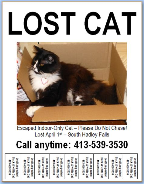 templates for lost pet flyers flyer design templates lost pet research recovery