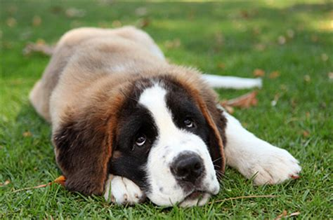 how to a puppy to be an outside why outdoor dogs are unhappy