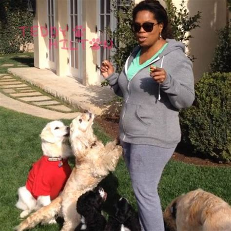 oprah s dogs did oprah just make an oprah reference for national pet day this is hilarious