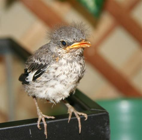 baby bird identification gallery