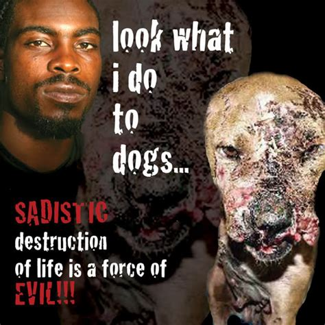 michael vick dogs michael vick do you forgive him his murdering ways madmikesamerica