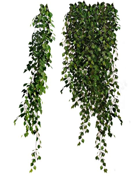 Bamboo Forest Wall Mural plants png clipart peoplepng com peoplepng com