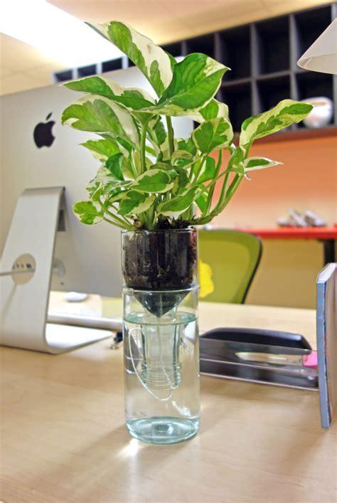 grow  amazing indoor garden   watering