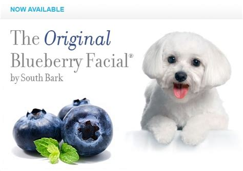 blueberries for dogs blueberry for white dogs