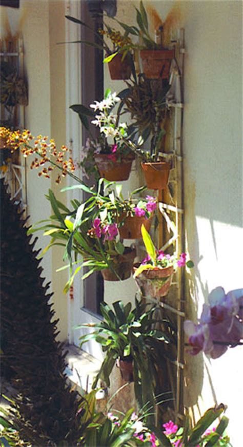 images  orchid designs  hangapot
