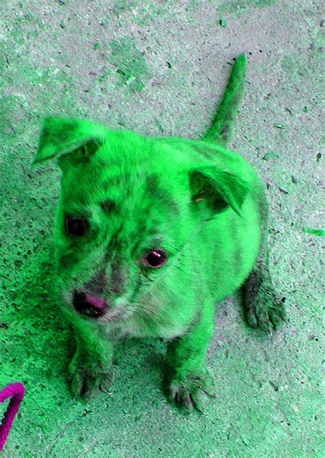 green puppy this year i am thankful for memebase sharenator