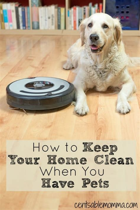 how to keep your house clean how to keep your home clean when you have pets centsable