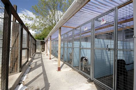 the dog house boarding kennels the house boarding kennels 28 images best kennel designs stafford boarding kennel