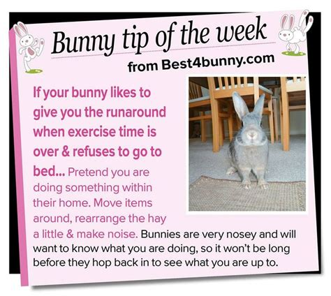 Must For The Week The House Bunny by 187 Best Bunnies Images On Bunnies Rabbit