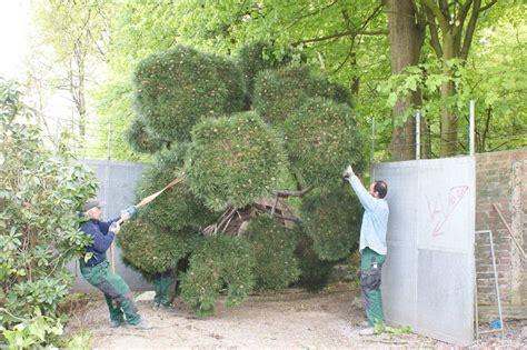 gräserbeet rasen absch 228 len alt rasen beseitigung absch len verladen